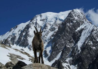 Mont Blanc (4810 m.)